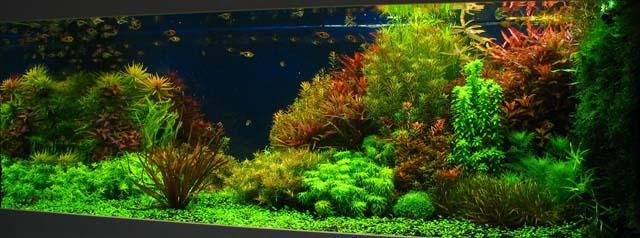 Bron: aquaforum.nl (deelnemer G29)