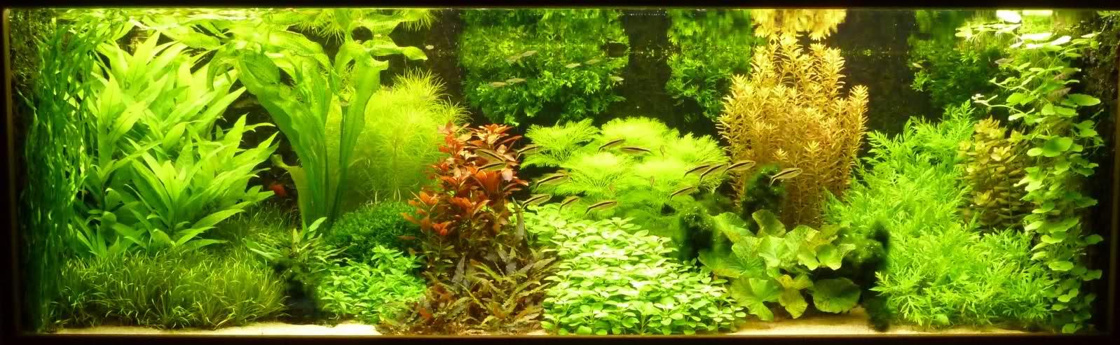 gebruik ph en kh vermindering in aquarium