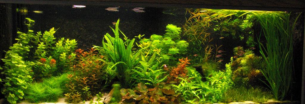 Walstad of terug in de tijd aquaria met een zware bodem