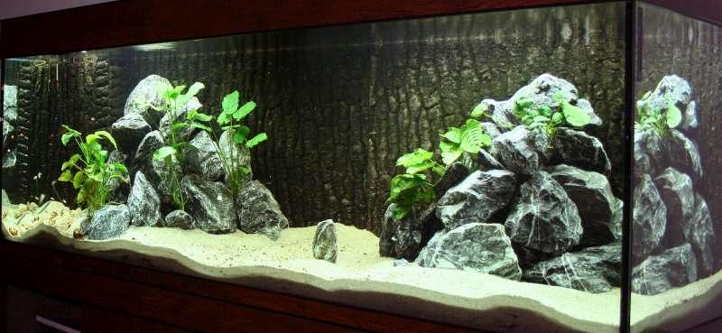 A V  ONG   Tanganyika aquarium inrichten