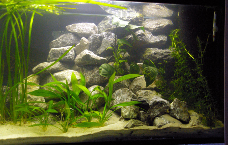 zelf aquarium ornamenten maken