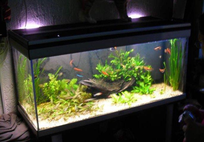 A V  ONG   Inleiding (Aquarium)