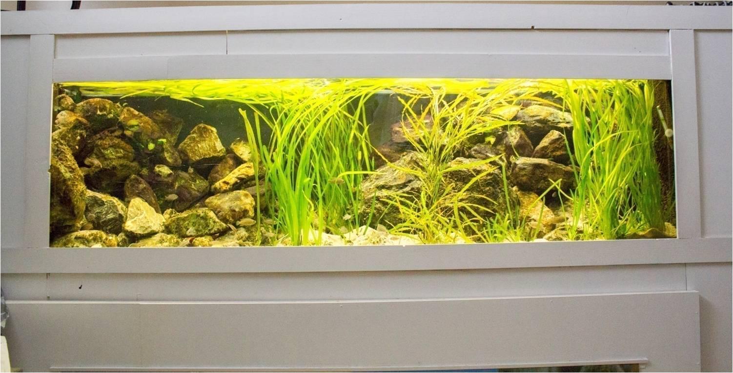 A.v. ong   tanganyika aquarium inrichten